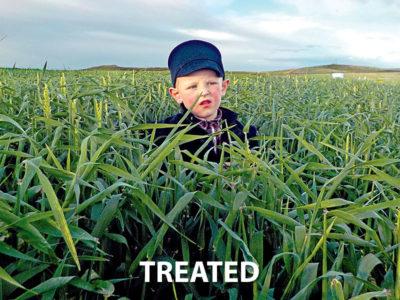 Organisan Hay Barley Treated