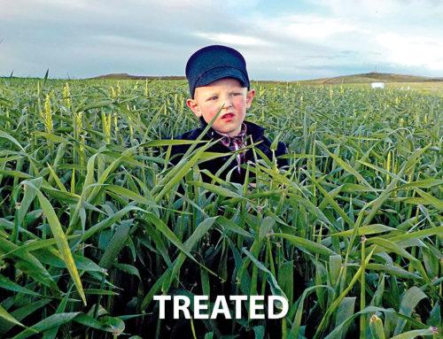 Hay Barley