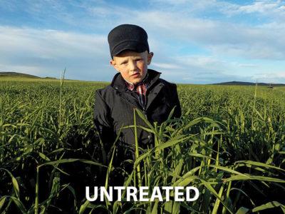 Organisan Hay Barley Untreated