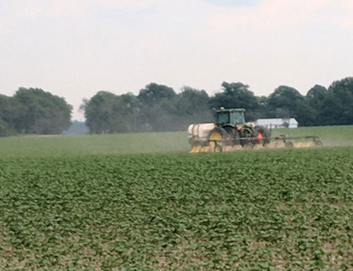 Mississippi Delta and Thrips